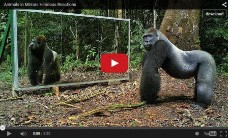 7000 Koleksi Gambar Binatang Lucu Gokil Terbaru